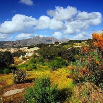 Vegetación nativa BC:Carlos Varela.jpg