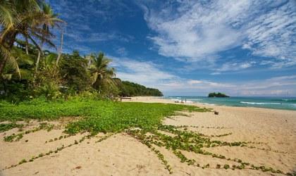 Frijol de playa, Playa Cocles. Foto por Manuel Pinto.jpg