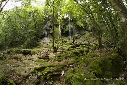 Reserva de la biosfera El Cielo Tamaulipas, México.jpg