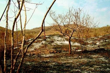 Area quemada_Chamela.jpg
