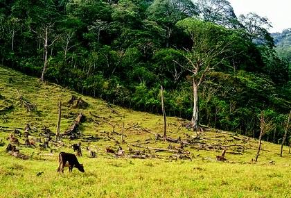 Deforestacion en Los Tuxtlas.jpg